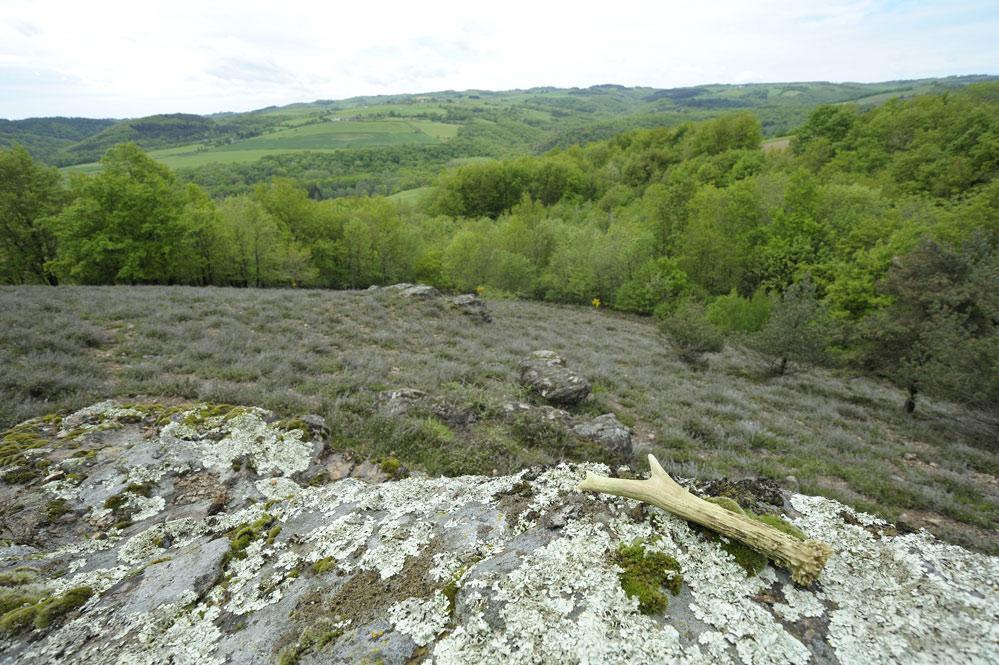 Mue de chevreuil sur les hauteurs du Puy de dôme